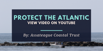 Protect the Atlantic - YouTube Video