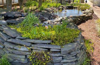 Mayor's Pond